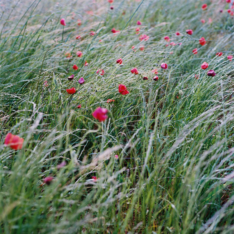 ©Lika-Banshoya_Photography_Poppy-field-Coquelicots-Drome-Rhone-Alpes