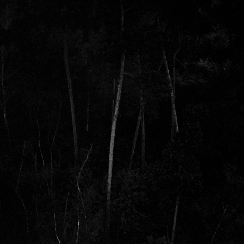 les-arbres-se-parlent-tout-bas-4