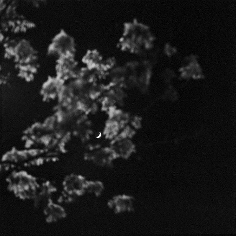 les-arbres-se-parlent-tout-bas-6