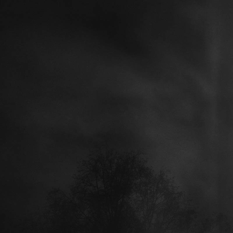 les-arbres-se-parlent-tout-bas-lika-banshoya-11
