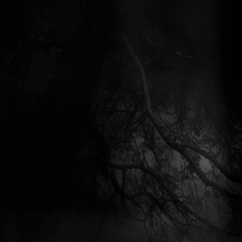 les-arbres-se-parlent-tout-bas-lika-banshoya-7