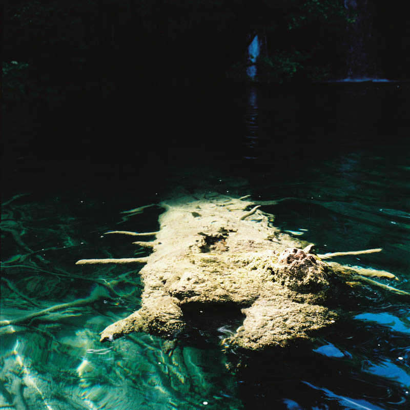 A tree trunk underwater looking like a strange creature at Plitvice Lakes, Croatia